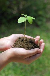 pflanzen-vermehrung