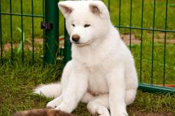Hund im Zwinger_© Conny Hagen - Fotolia.com